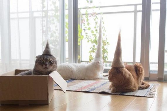 04-cats-in-hats-hair-from-own-backs