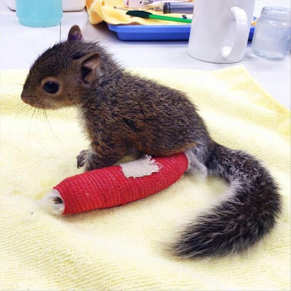 04-cute-animals-in-casts