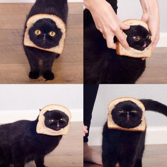 05-cat-costumes