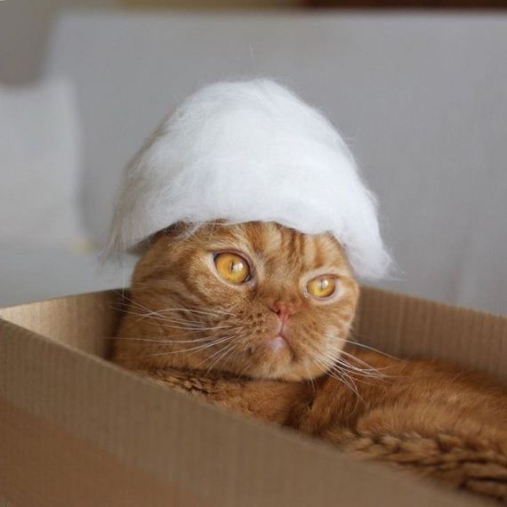 05-cats-in-hats-hair-from-own-backs