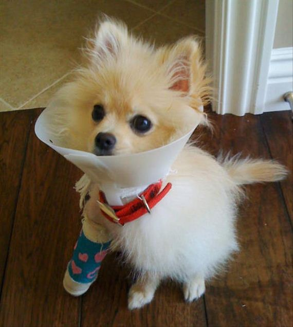 05-cute-animals-in-casts