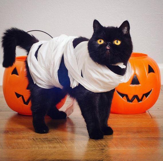 06-cat-costumes