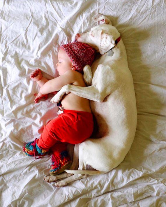 06-tiny-human-dogs
