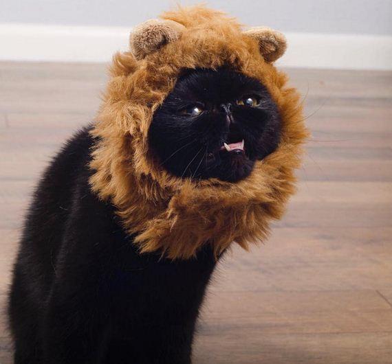 07-cat-costumes