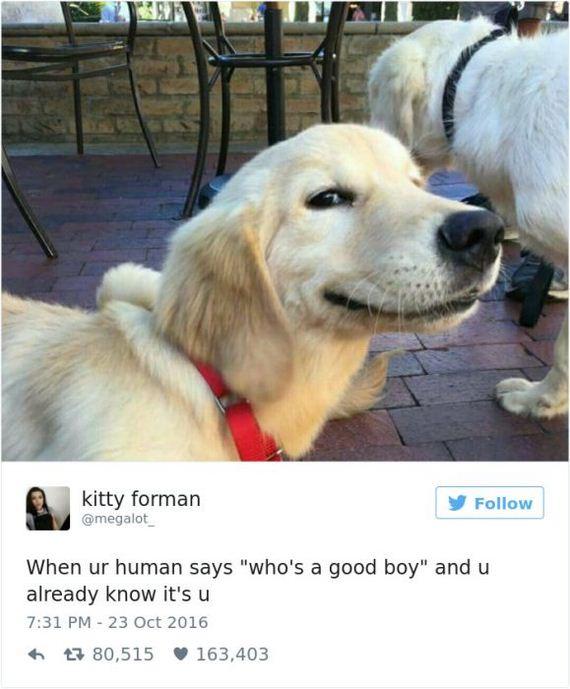 07-funny_dog_tweets