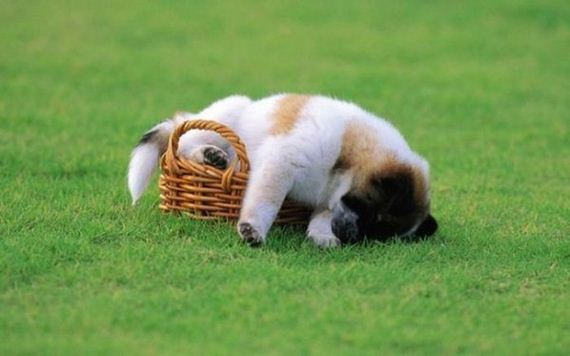 07-sleeping_pets