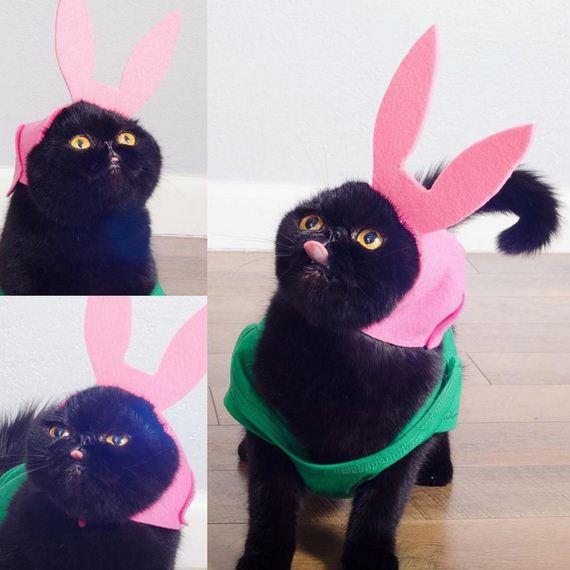 08-cat-costumes