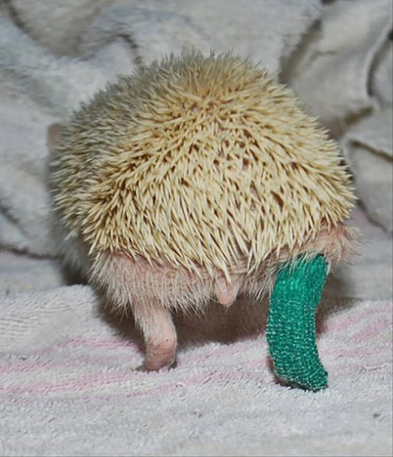 08-cute-animals-in-casts