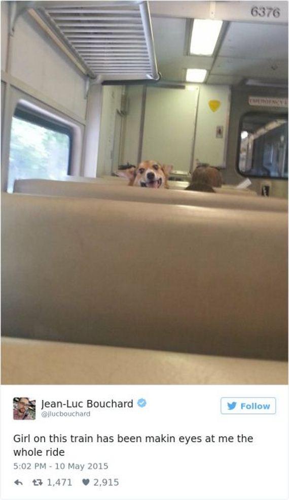 08-funny_dog_tweets
