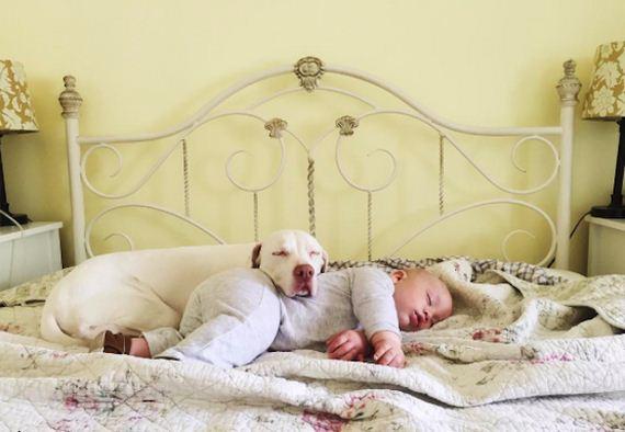 08-tiny-human-dogs