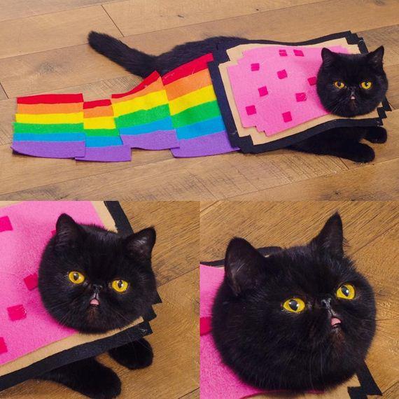 09-cat-costumes