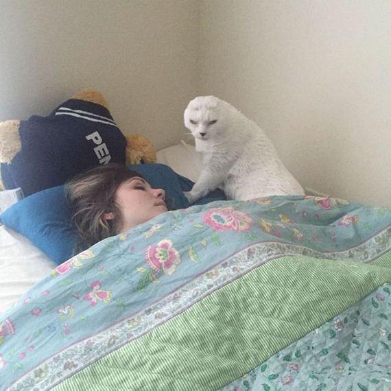 09-adopts_cat