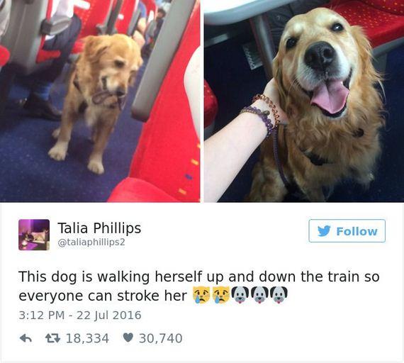 09-funny_dog_tweets