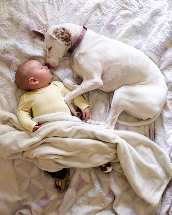 09-tiny-human-dogs