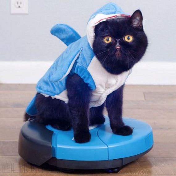 10-cat-costumes