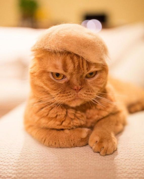 10-cats-in-hats-hair-from-own-backs