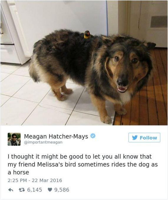 10-funny_dog_tweets