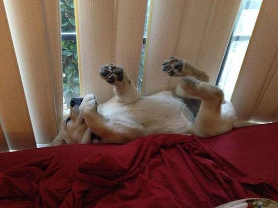 10-sleeping_pets