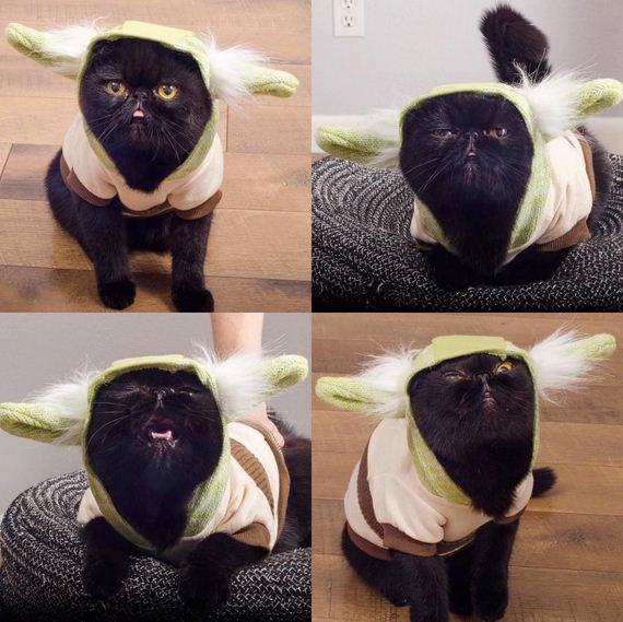 11-cat-costumes