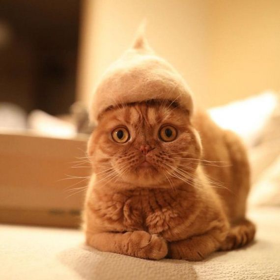 11-cats-in-hats-hair-from-own-backs