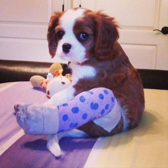 11-cute-animals-in-casts