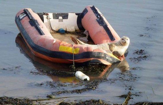 11-unusual_boats