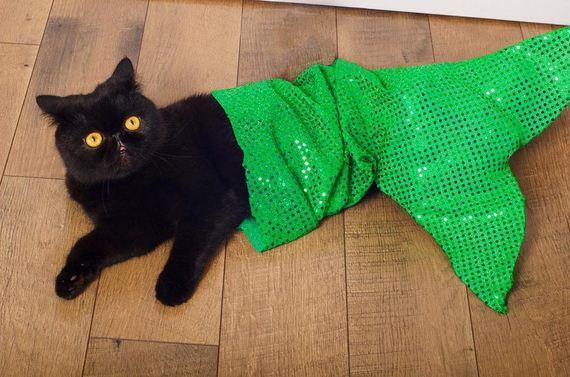 12-cat-costumes