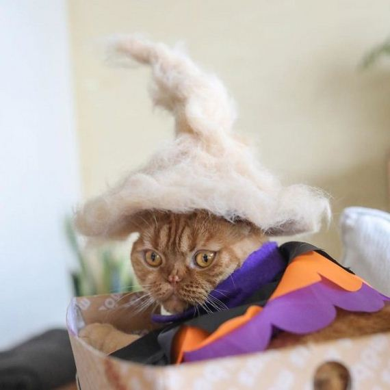 12-cats-in-hats-hair-from-own-backs