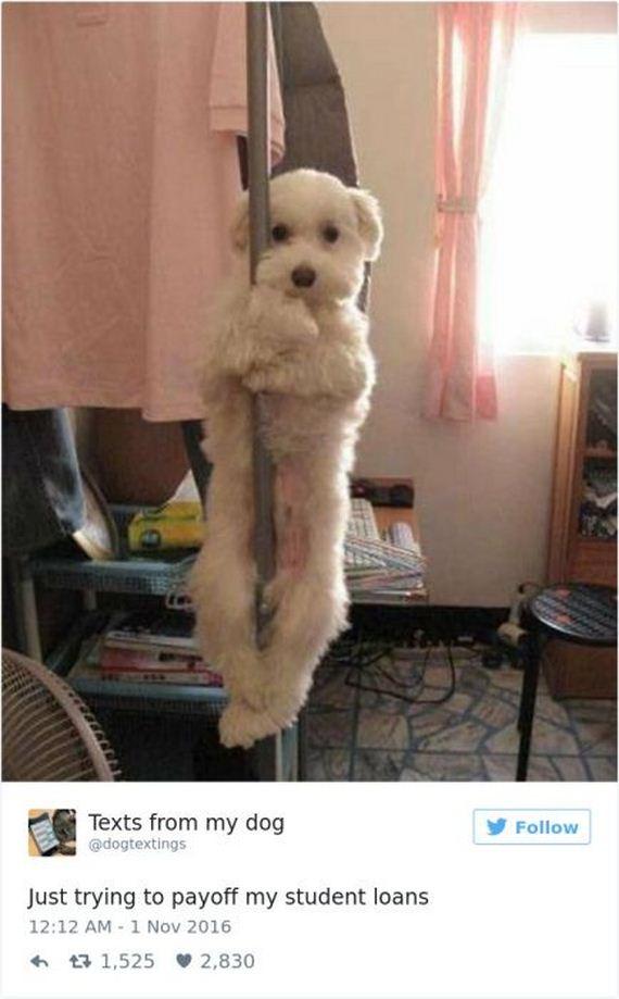 12-funny_dog_tweets