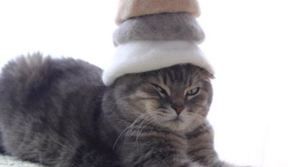13-cats-in-hats-hair-from-own-backs