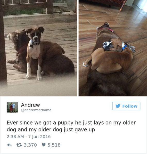 13-funny_dog_tweets