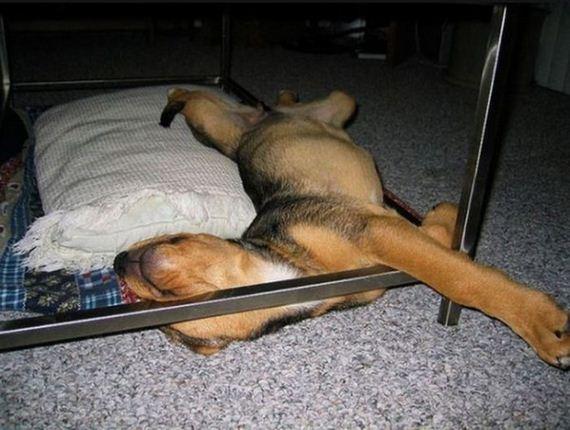 13-sleeping_pets