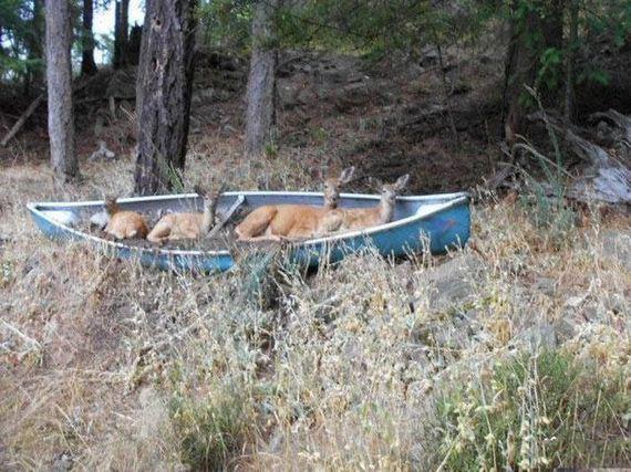 13-unusual_boats