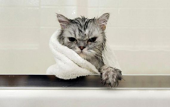 14-cats-hate-bath