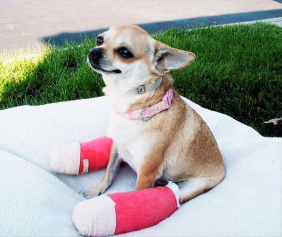 14-cute-animals-in-casts