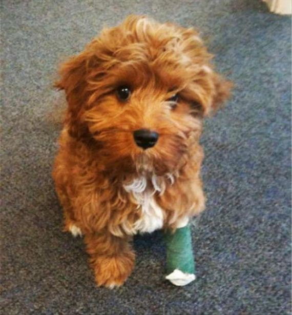 15-cute-animals-in-casts