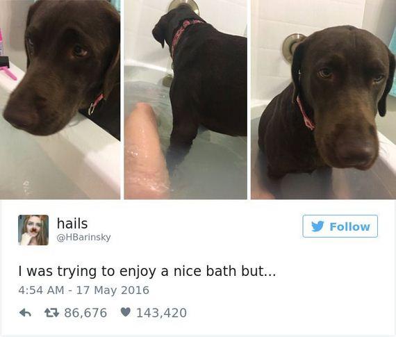 16-funny_dog_tweets