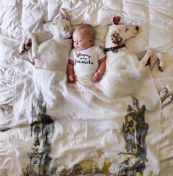 16-tiny-human-dogs