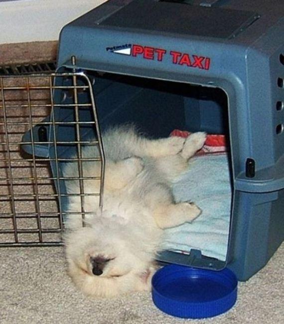 17-sleeping_pets