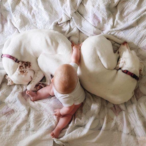 17-tiny-human-dogs