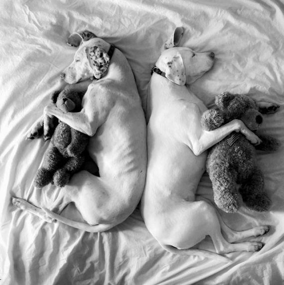 18-tiny-human-dogs