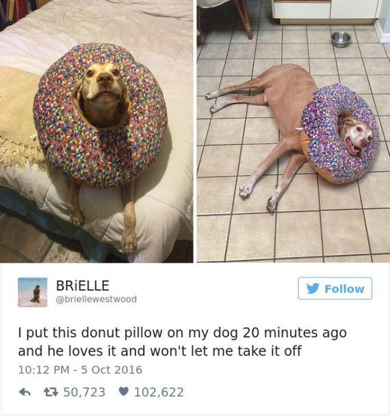19-funny_dog_tweets