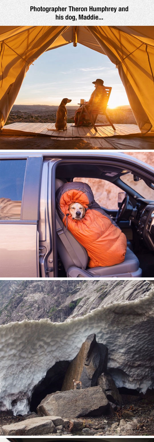1cool-dog-owner-camping-photograph