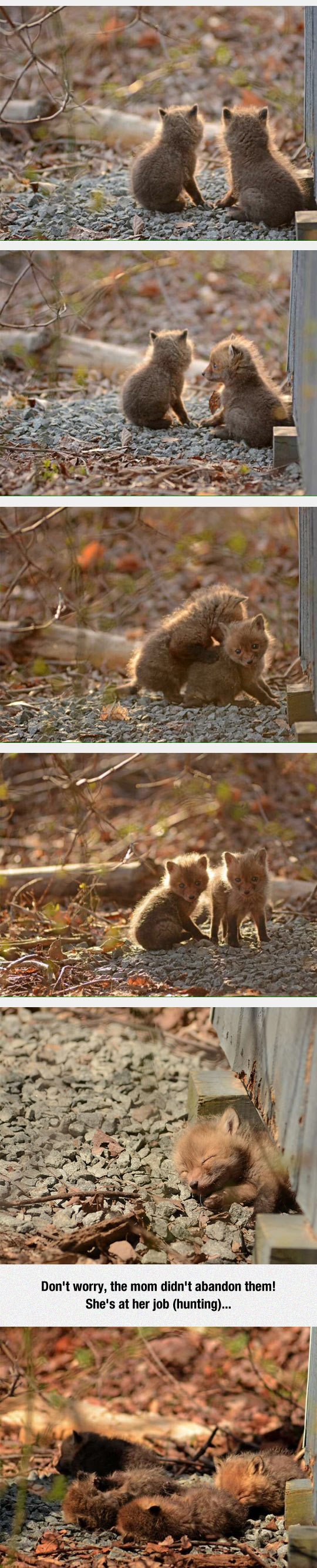 2-funny-backyard-baby-foxes-new-jersey-fall