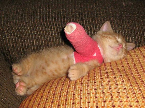 20-cute-animals-in-casts