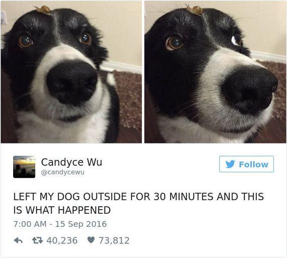 20-funny_dog_tweets