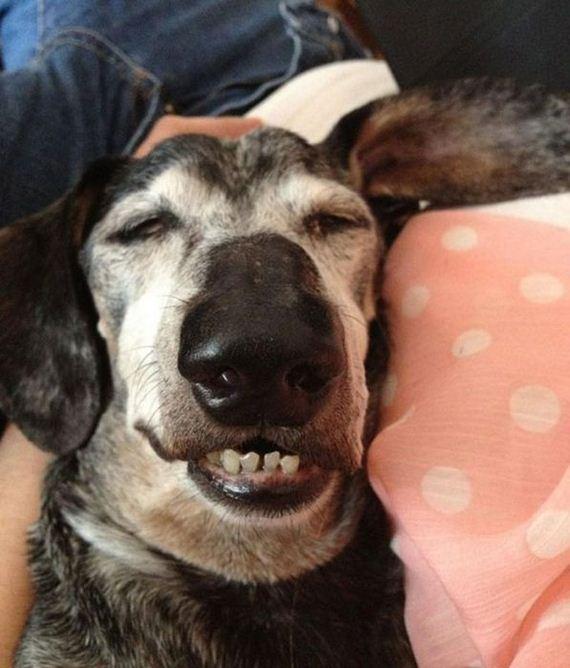 20-sleeping_pets