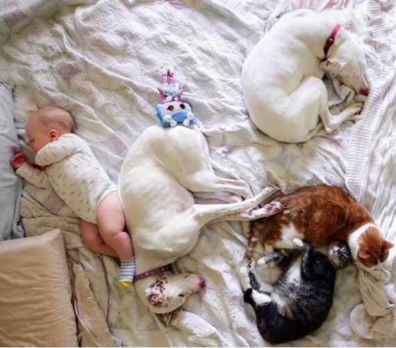 20-tiny-human-dogs