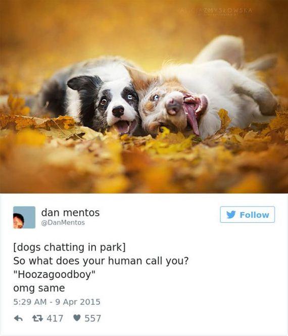 21-funny_dog_tweets