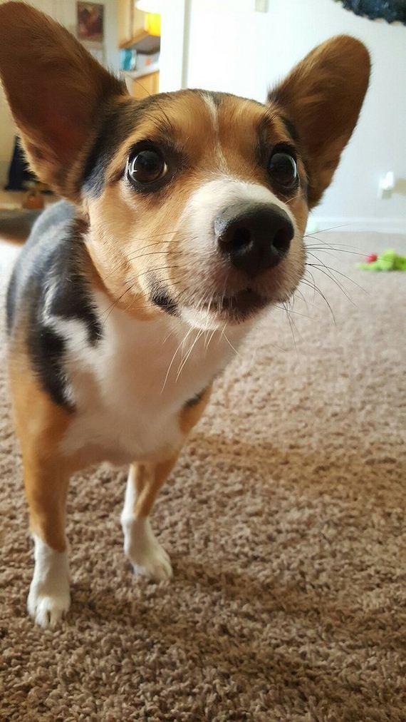 21-lifes-ruff-get-a-dog